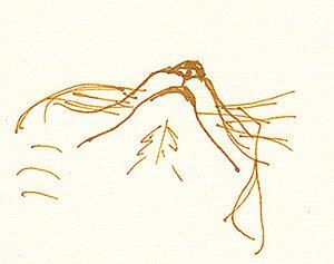 bunny-sketch-05-11-300px.jpg